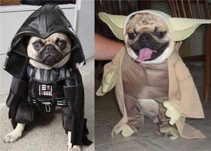 starwars pugs Palm User Groups and dogs